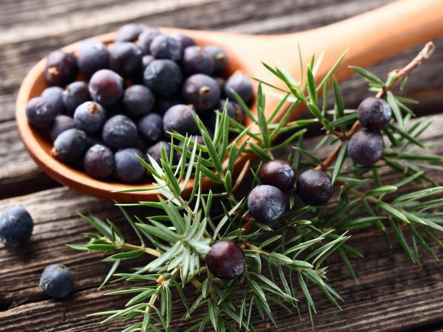 Juniperus Communis Fruit Oil -