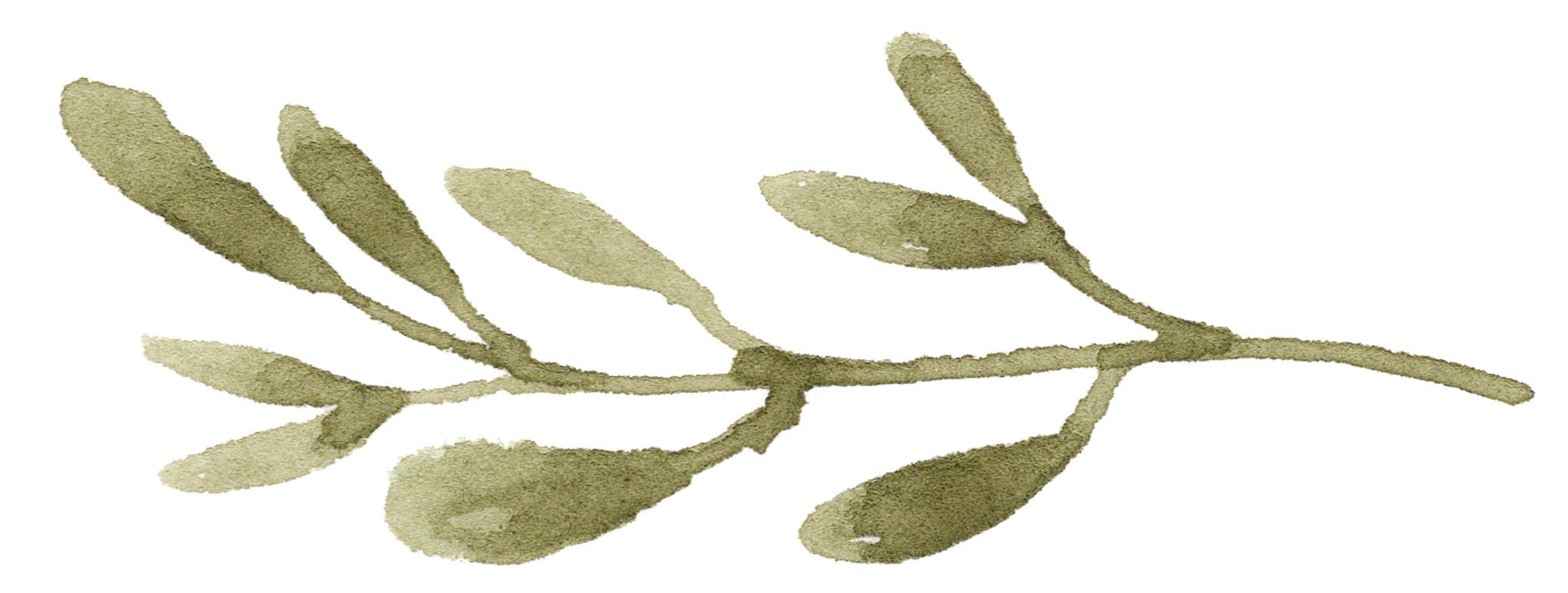 14+Mistletoe.jpg