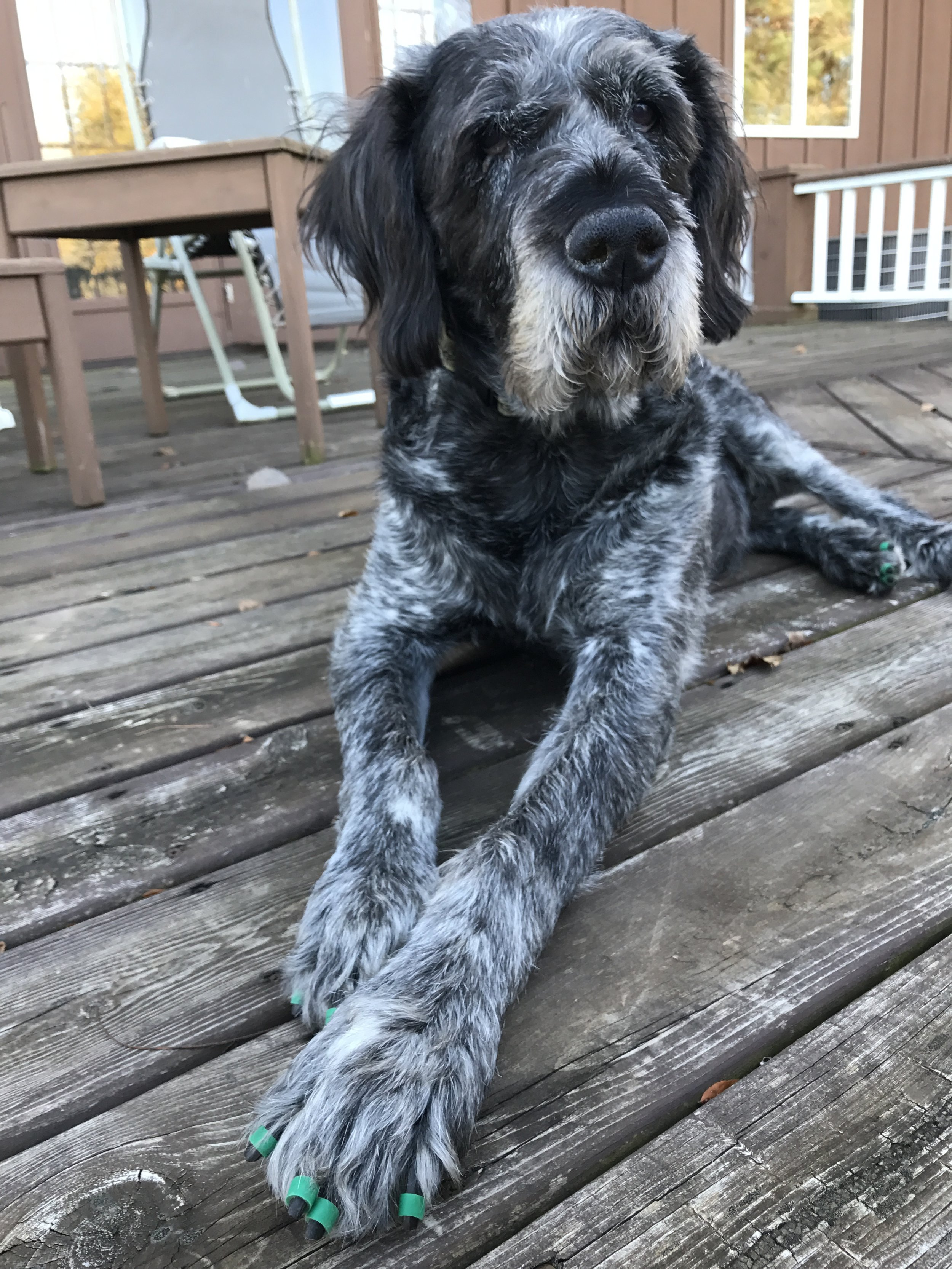 Toe grips help senior dogs with traction.