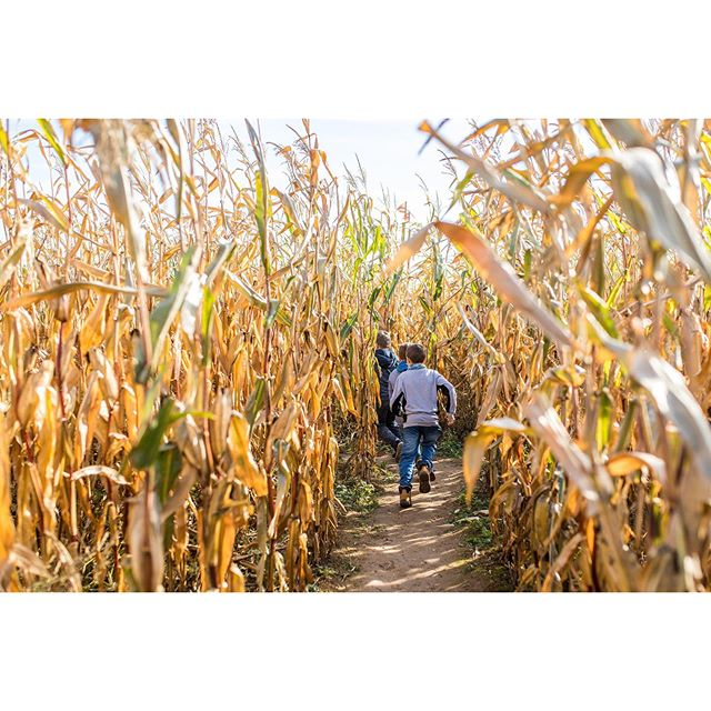 It's opening weekend at McDonald Farm. Take a wagon ride to Old McDonald's Pumpkin Patch or find your way through our better than ever corn maze. There's Fall fun for the entire family at McDonald Farm. #fallfestivities #pumpkinpatch