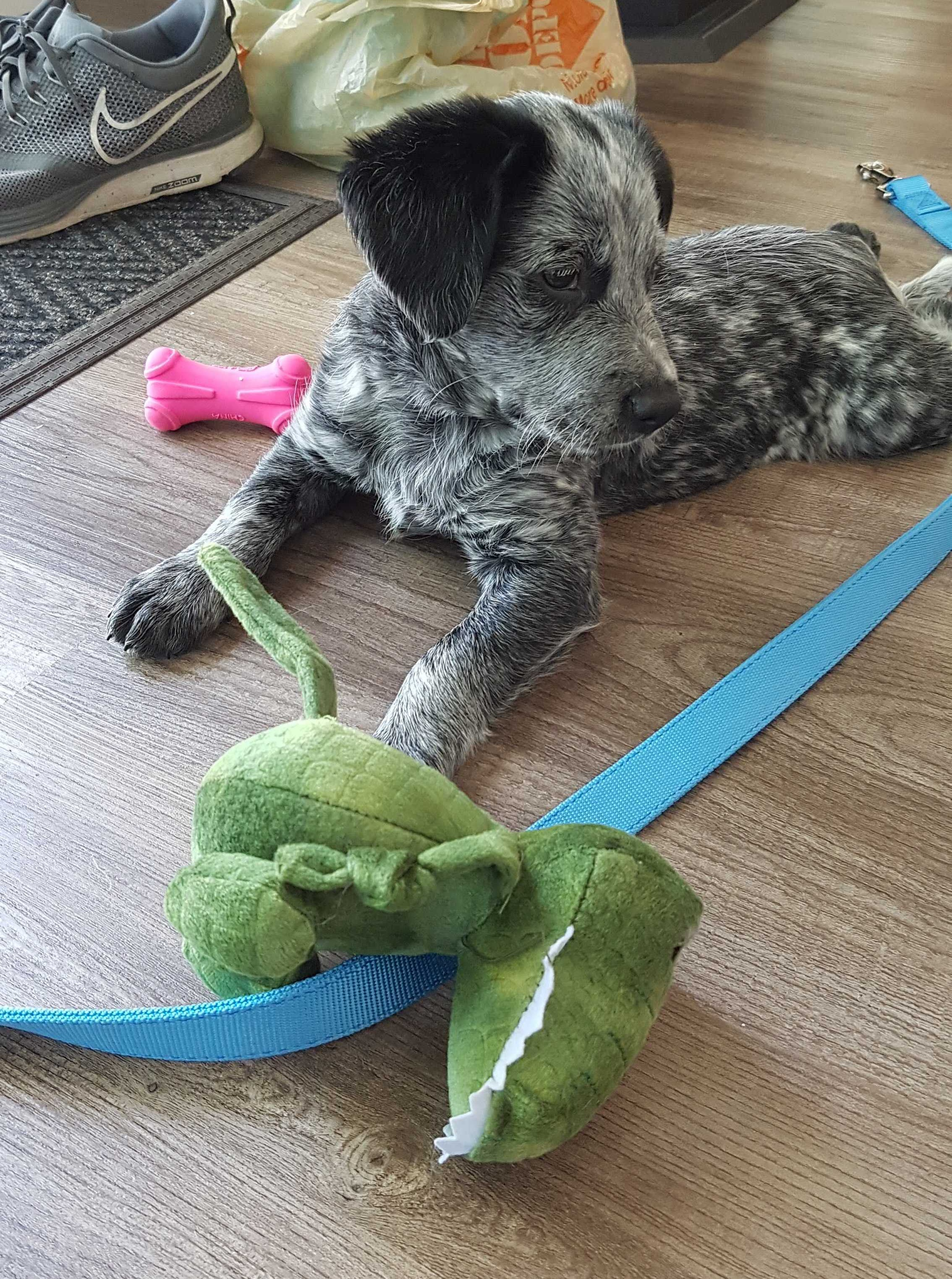 This is his dragon and he loves it.