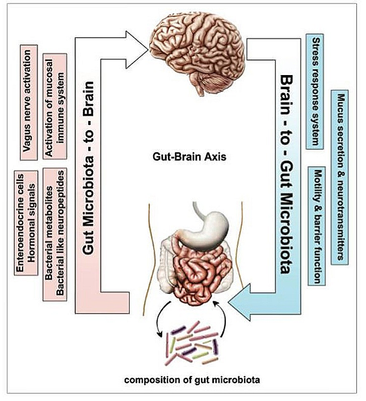 Gut+brain+connection.jpg