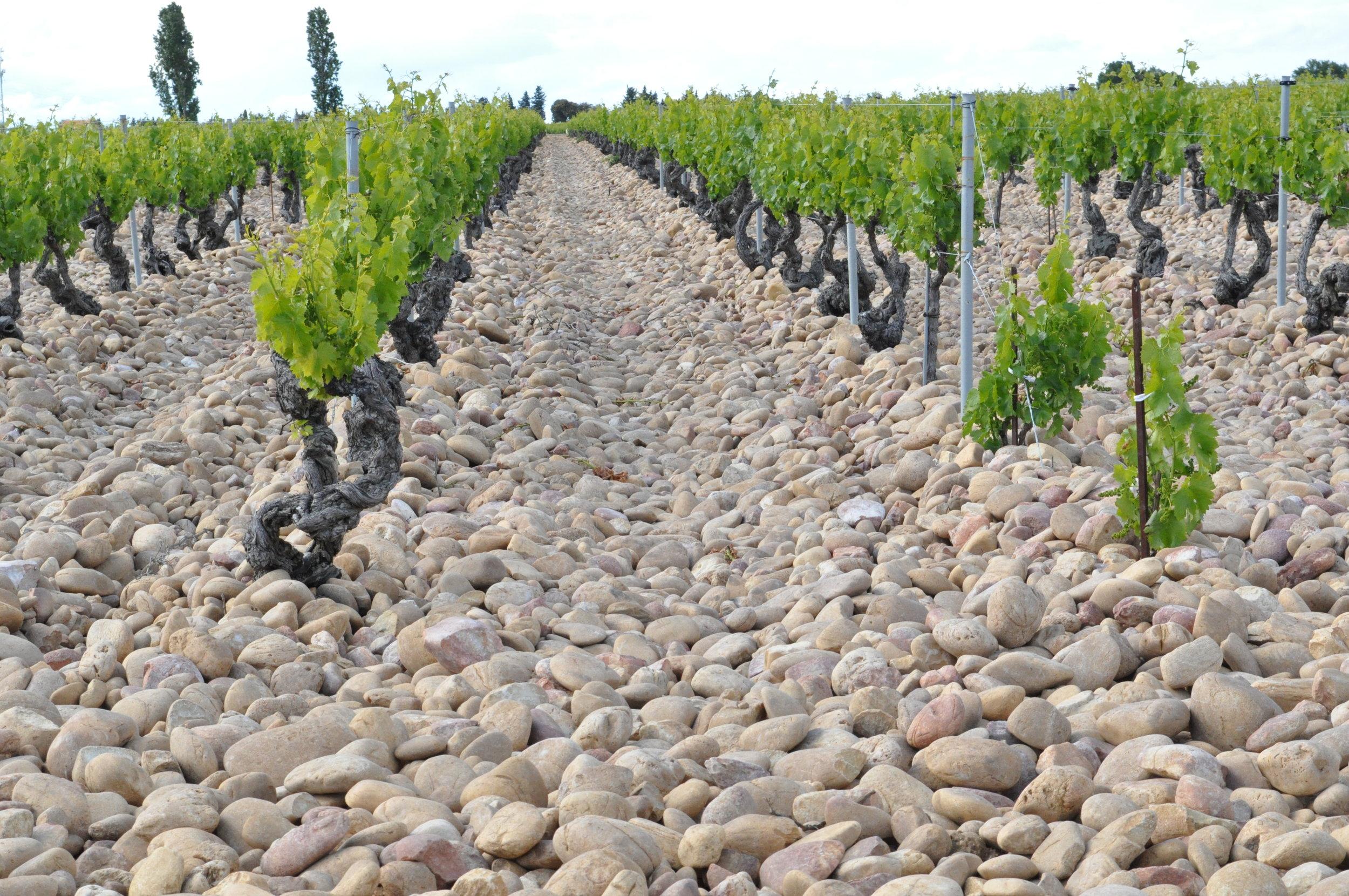 The famous Châteauneuf-du Pape galets stones