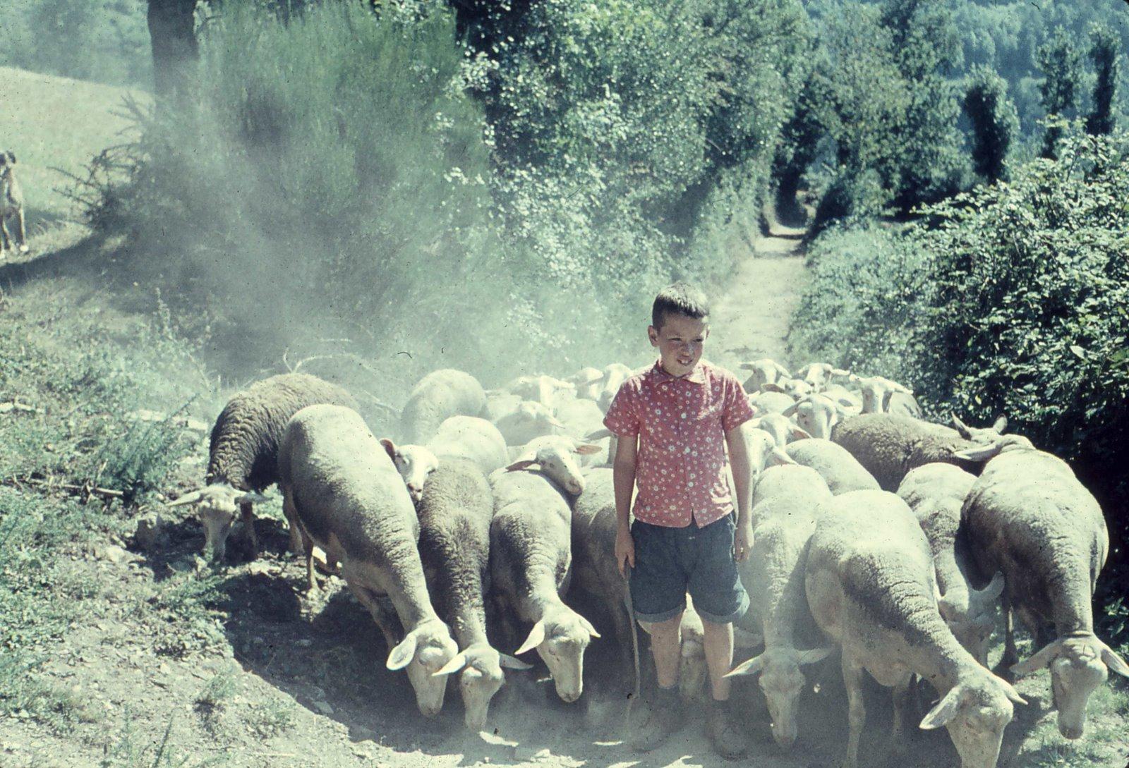 Me with Mémé's sheep.