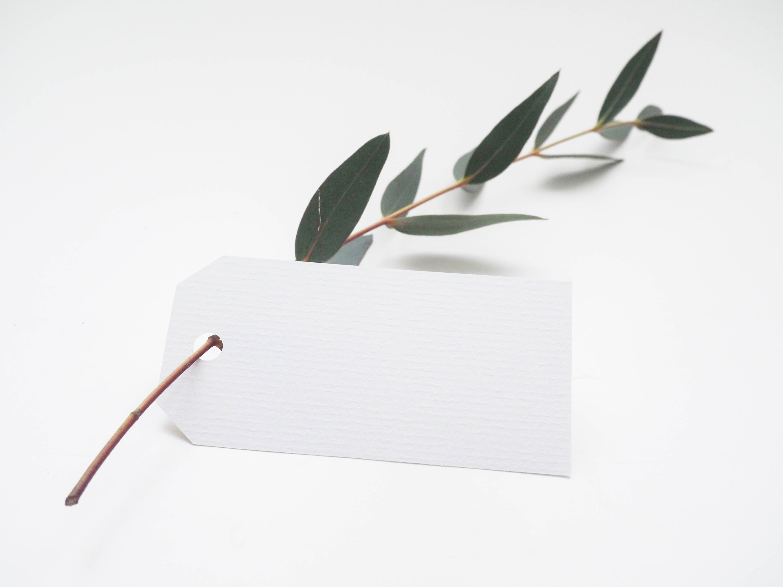Branch with green leaves on a clean white background