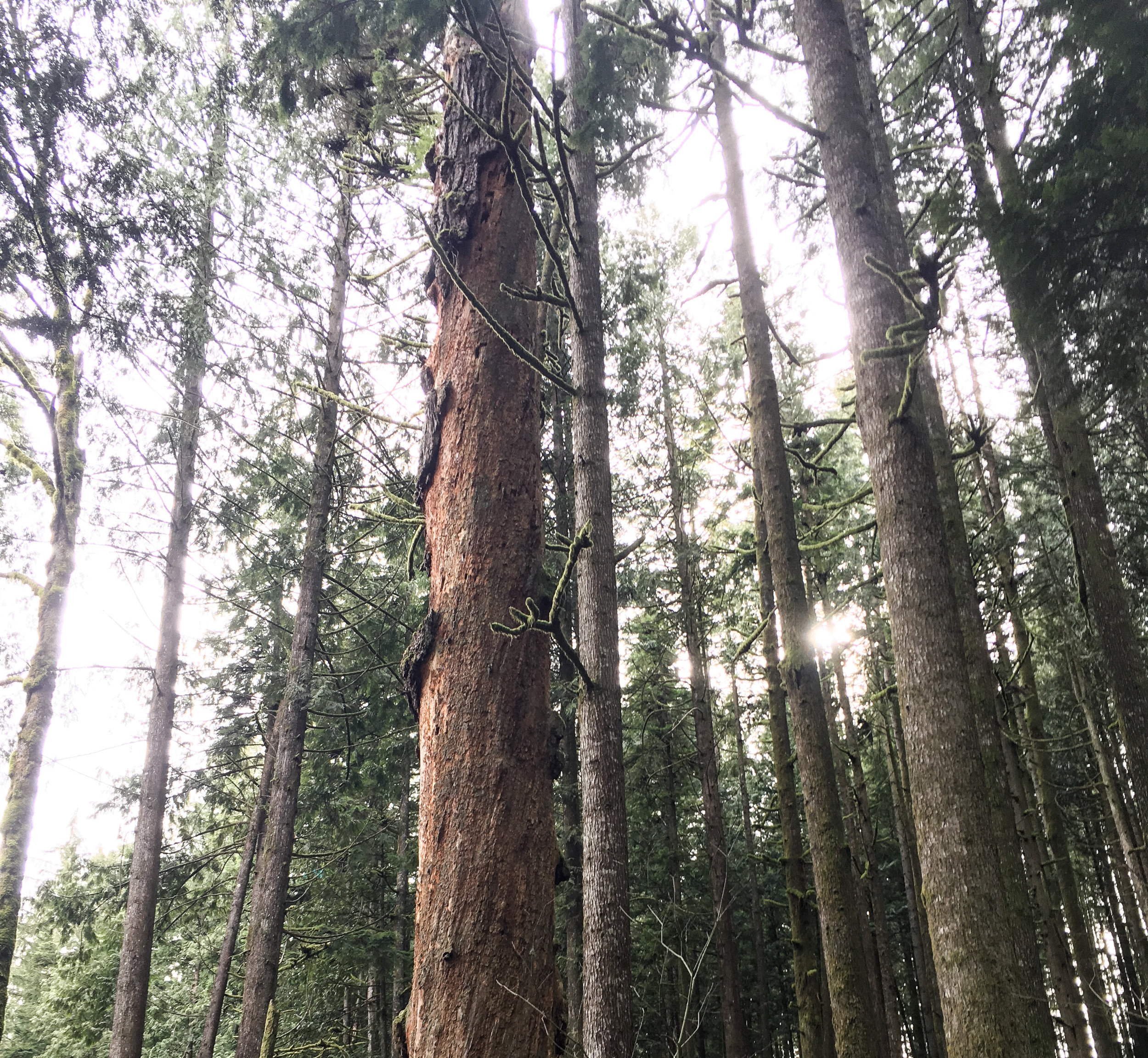 Why forest bathing is good for you | THE RIGHT SIDE OF FIFTY