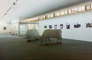 Cows graze between series of photographs of burials above and below-ground