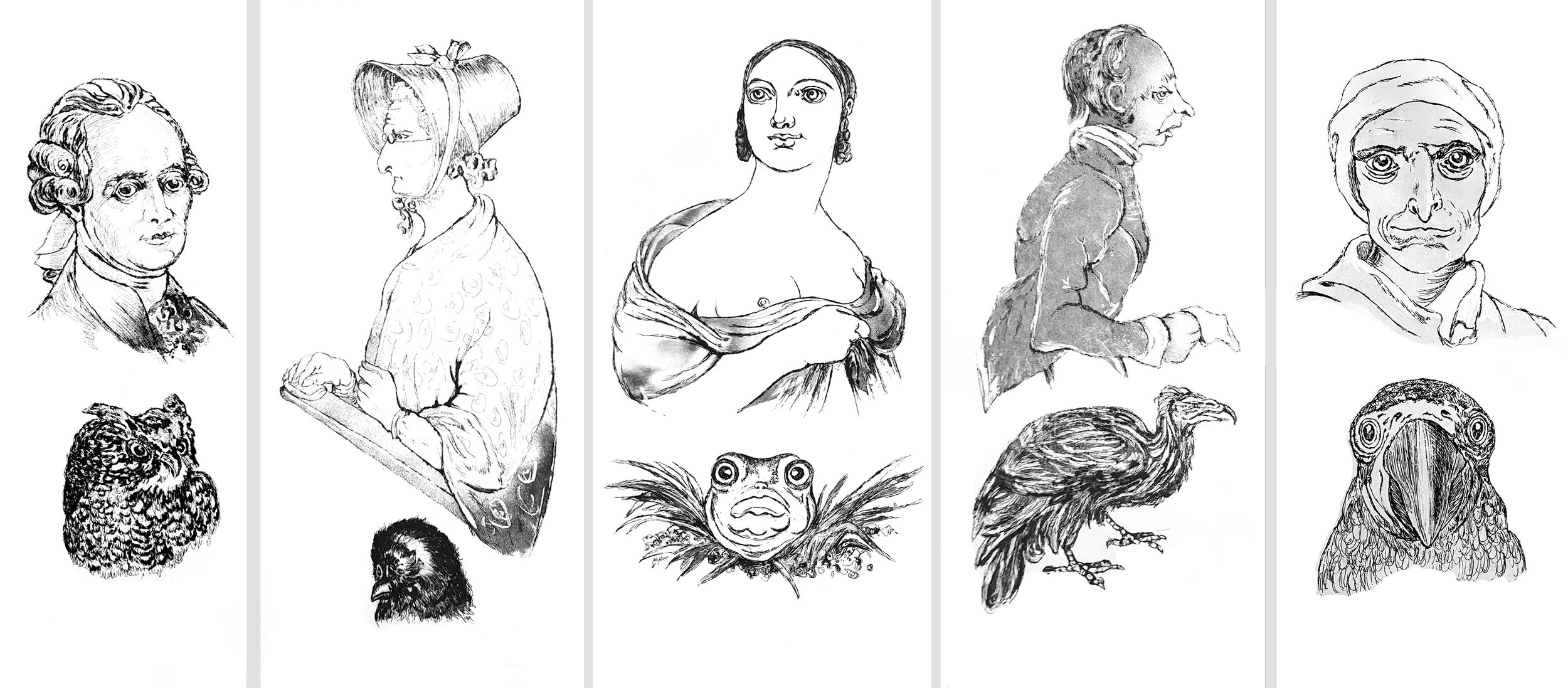 Human and animal resemblance  Five copper-plate etchings each c. 45 x 20 cm.
