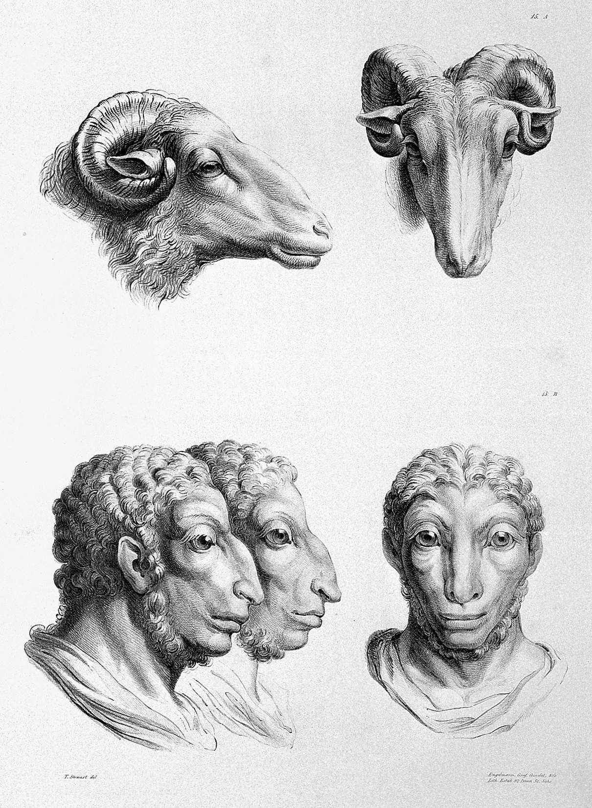 Figure 2 Charles Le Brun, The relation between the human physiognomy and that of the brute creation, 1671