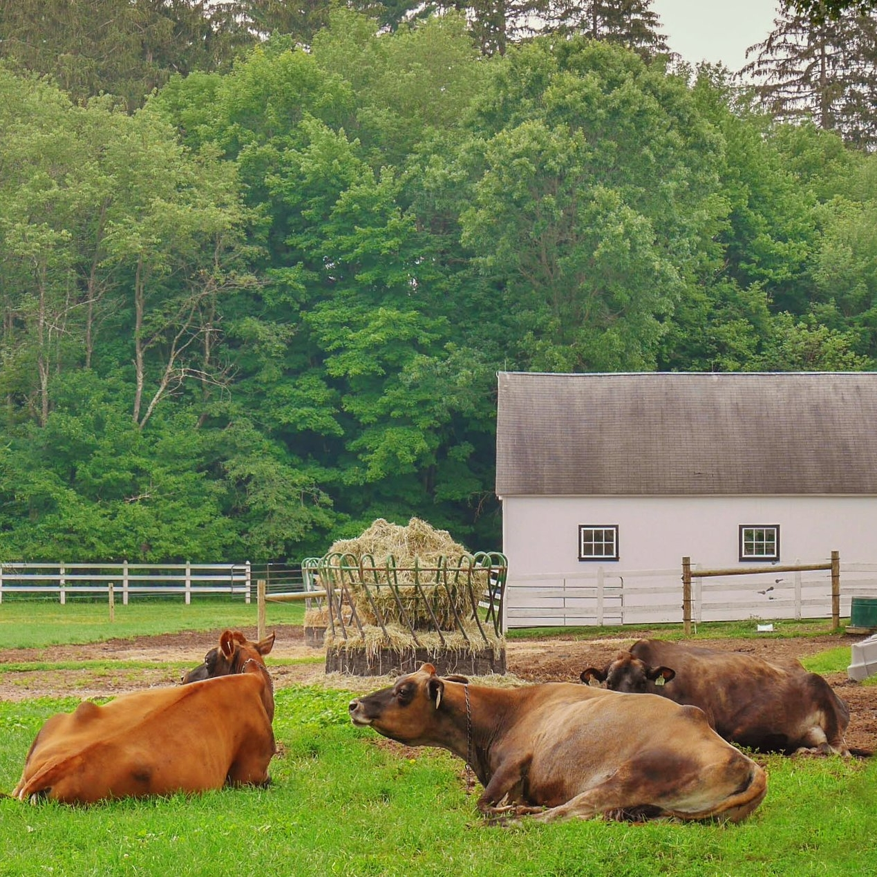 Farms for Foodies - Farming plays a tremendous role in the past & present of the Litchfield Hills
