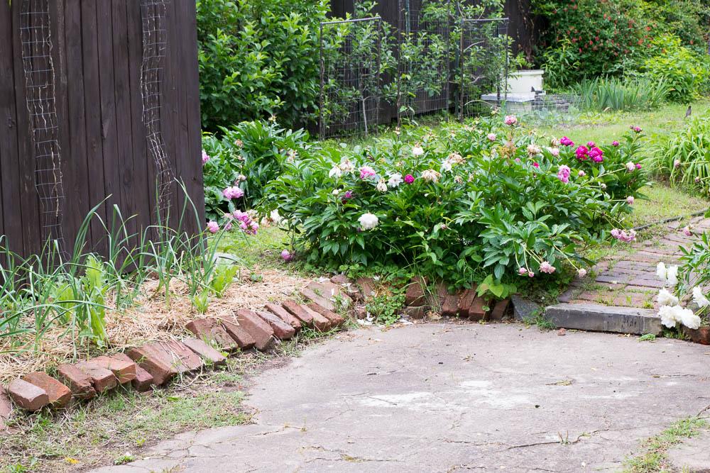 Oregon-Hill-gardens-3706-15.jpg