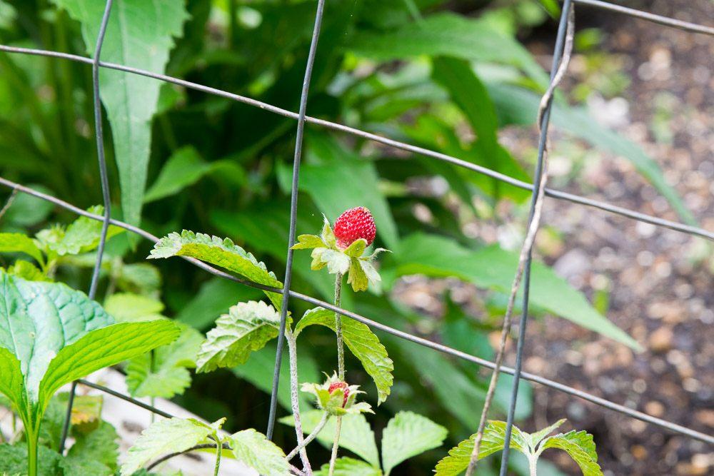 Oregon-Hill-gardens-3712-17.jpg