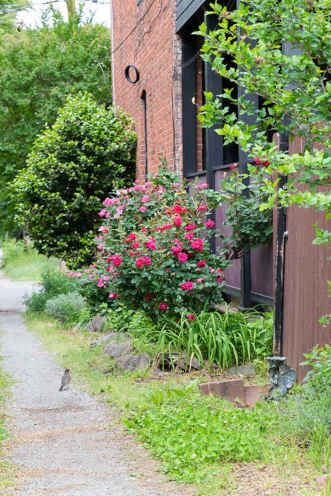 Oregon-Hill-gardens-3753-28.jpg