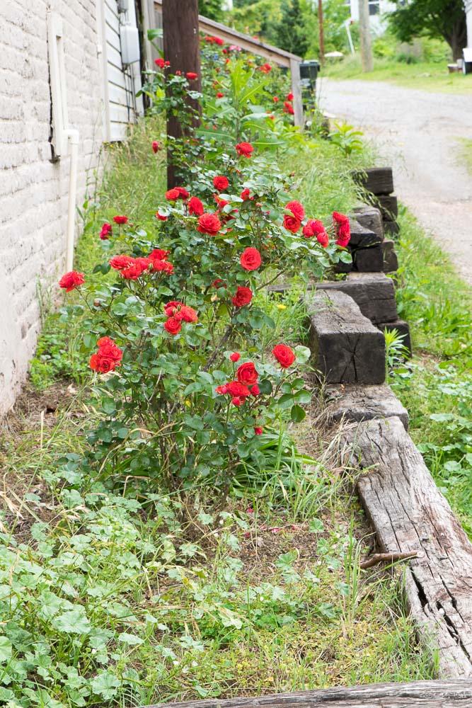 Oregon-Hill-gardens-3777-39.jpg
