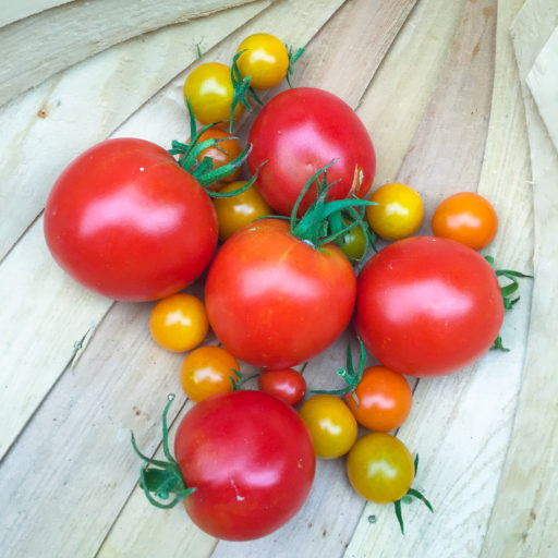 cropped-kitchenplot-tomatoes-1-2.jpg
