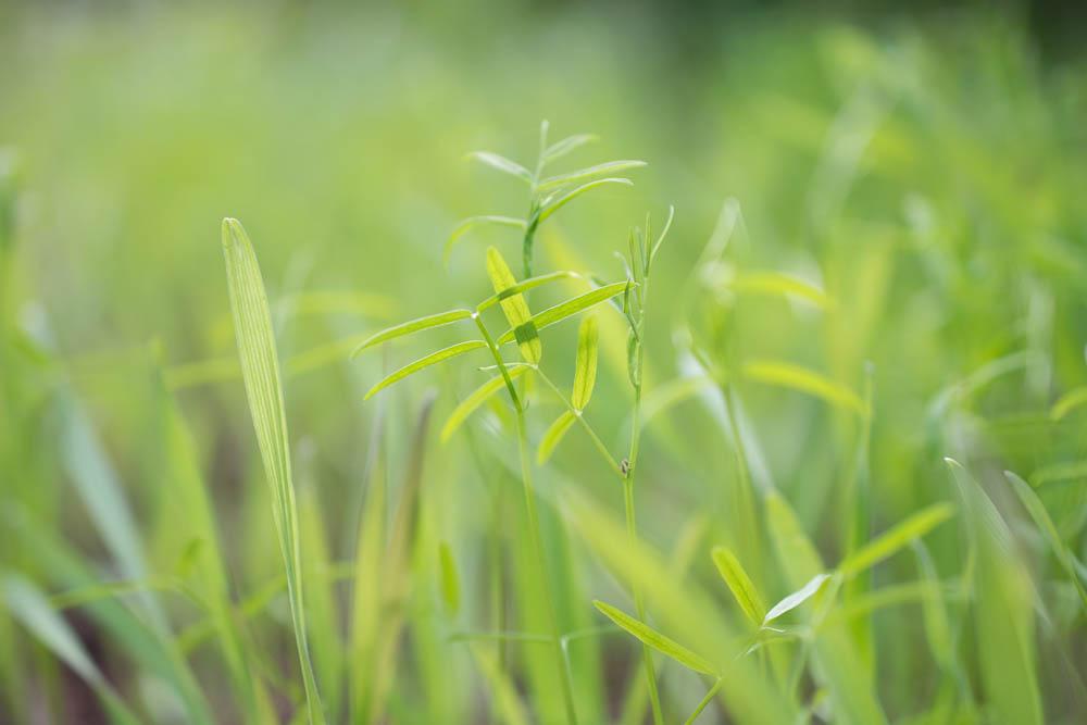 cover-crop.jpg