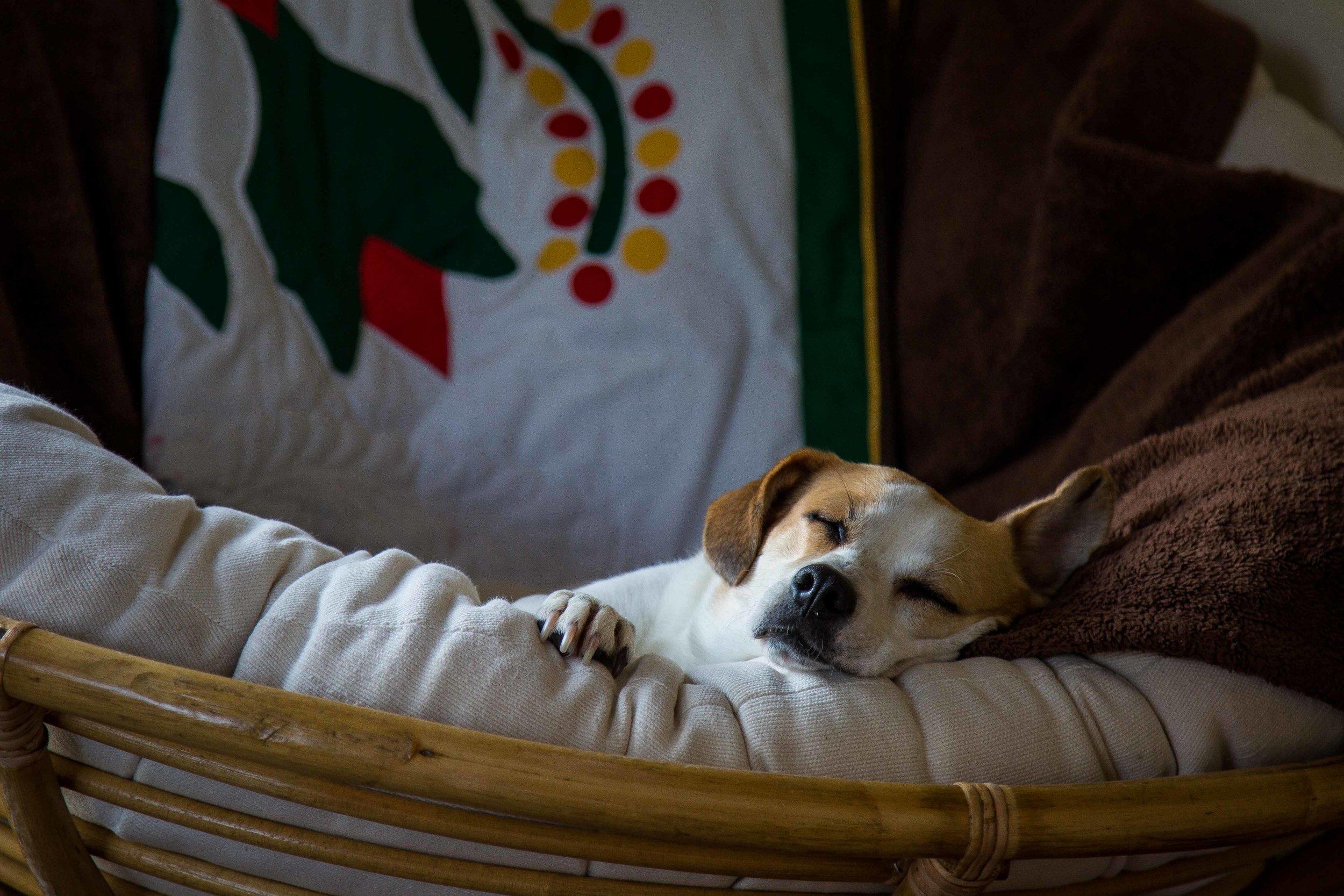 DillonVibesPhotography_Dog-1-3.jpg