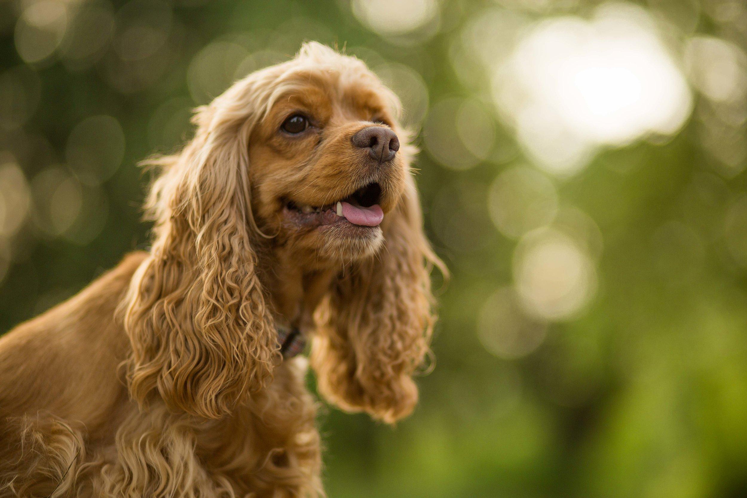 DillonVibesPhotography_Dog-1.jpg