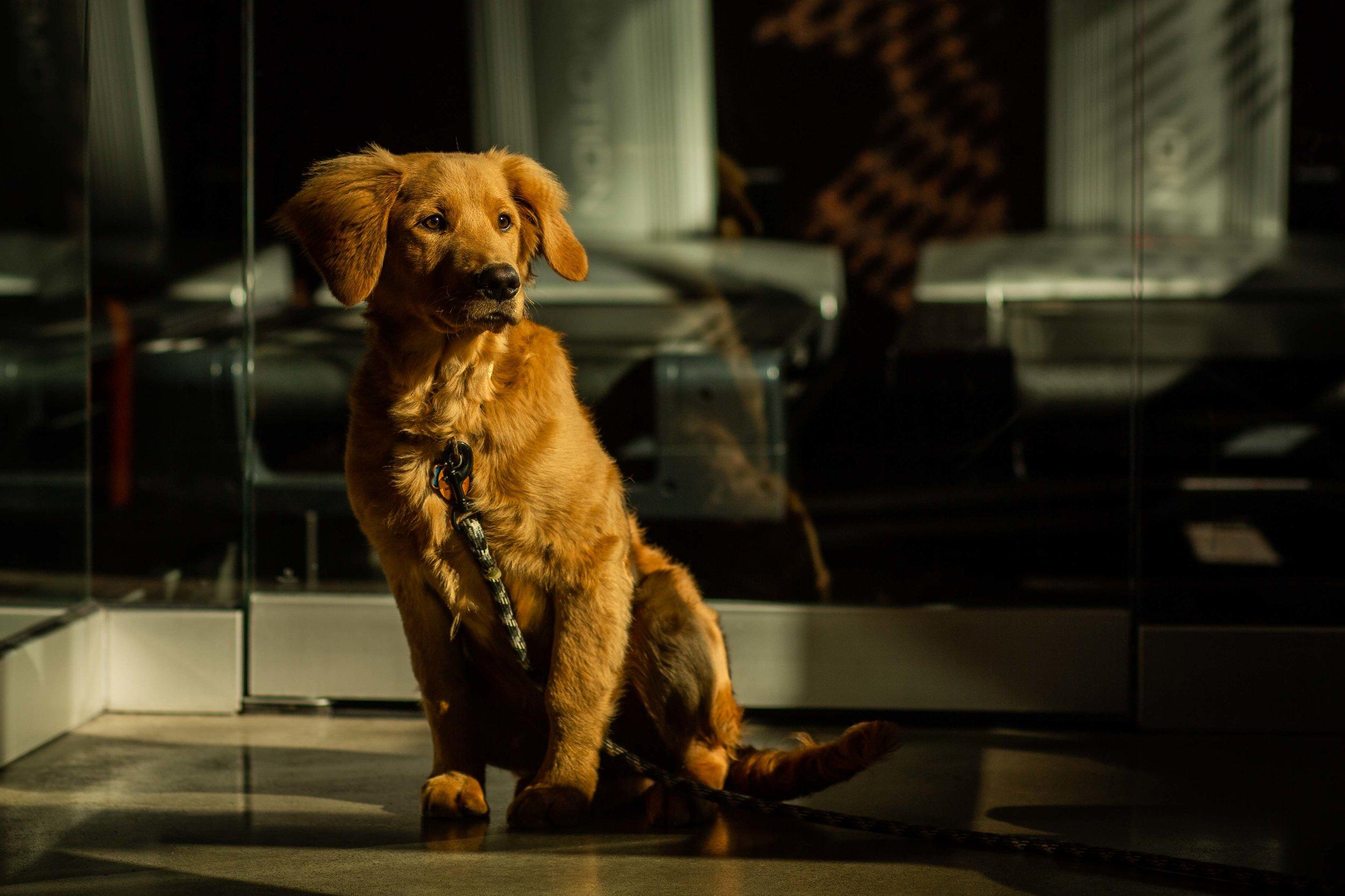 DillonVibesPhotography_Dogs_Blog-4.jpg