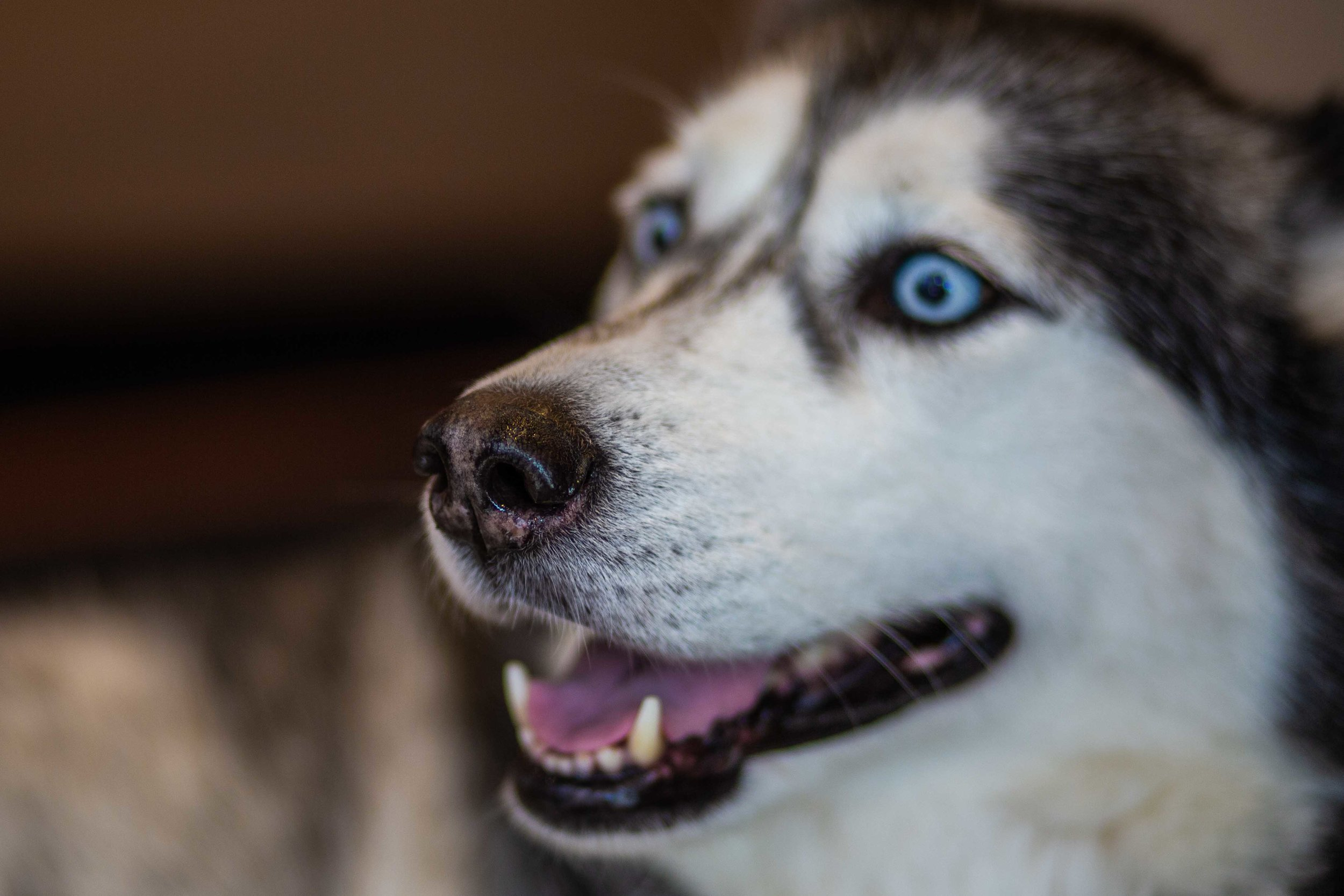 DillonVibesPhotography_Dogs_Blog-1.jpg