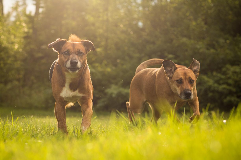 Dogs-Web-4.jpg