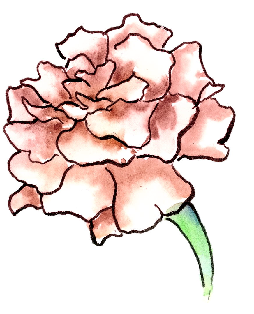 A pink carnation symbolizes a woman's love in Victorian Flower Language.
