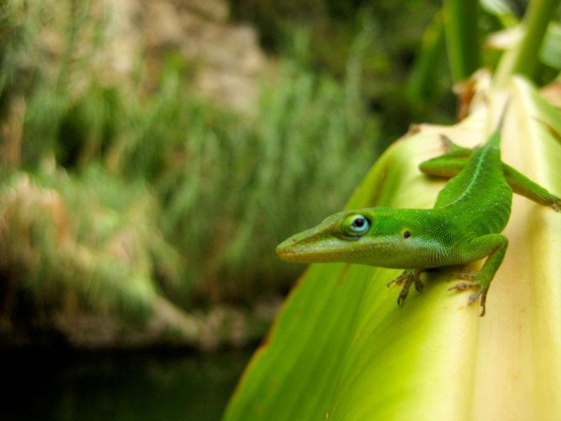 Lizard at San Antonio's Japanese Tea Gardens | Earthtones Travel + Design Blog | Roo Bea Design Co