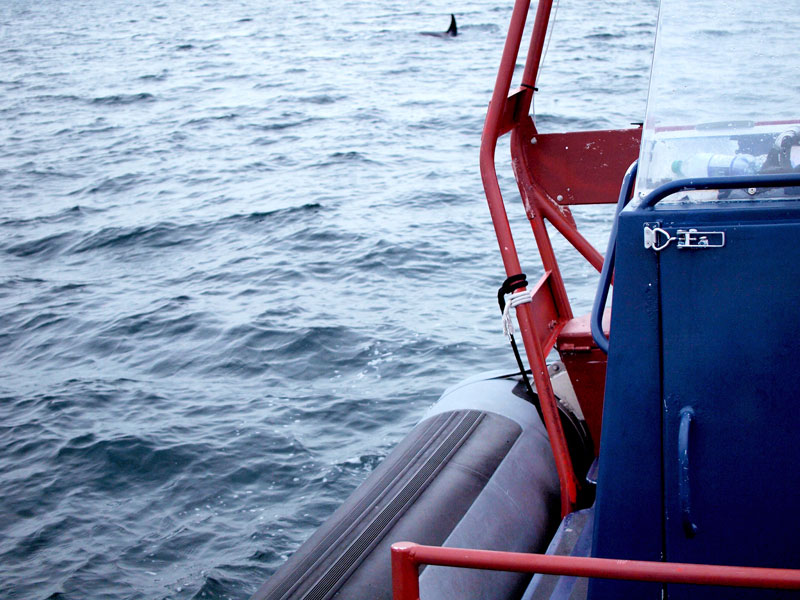 Zodiak Bout Tour Whale Watching Vancouver Island, Canada | Earthtones Travel + Design Blog | Roo Bea Design Co