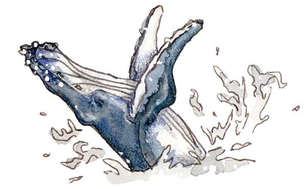 humpback whale watercolor drawing | Earthtones Travel + Design Blog | Roo Bea Design Co