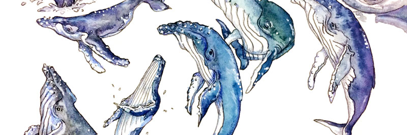 Humpback whales in watercolor with ink, colored pencils and a paint marker for details. | Earthtones Travel + Design Blog | Roo Bea Design Co