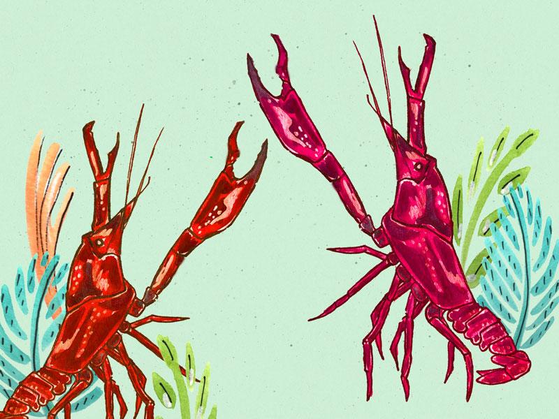 Big Corn Island, Nicaragua inspired lobster illustration | Earthtones Travel + Design Blog | Roo Bea Design Co