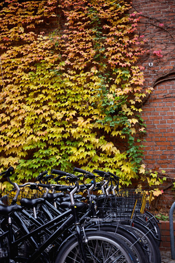 Bike Rental in Berlin Germany | Earthtones Travel + Design Blog | Roo Bea Design Co