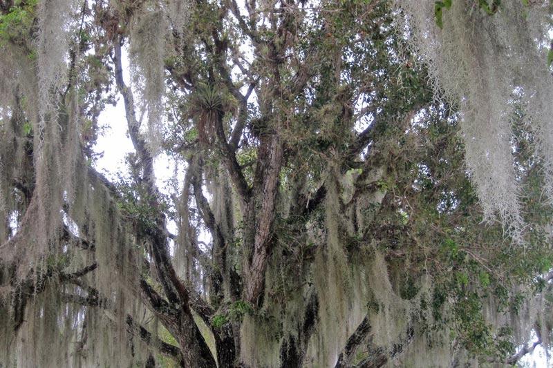 Everglades National Park Florida | Earthtones Travel + Design Blog | Roo Bea Design Co