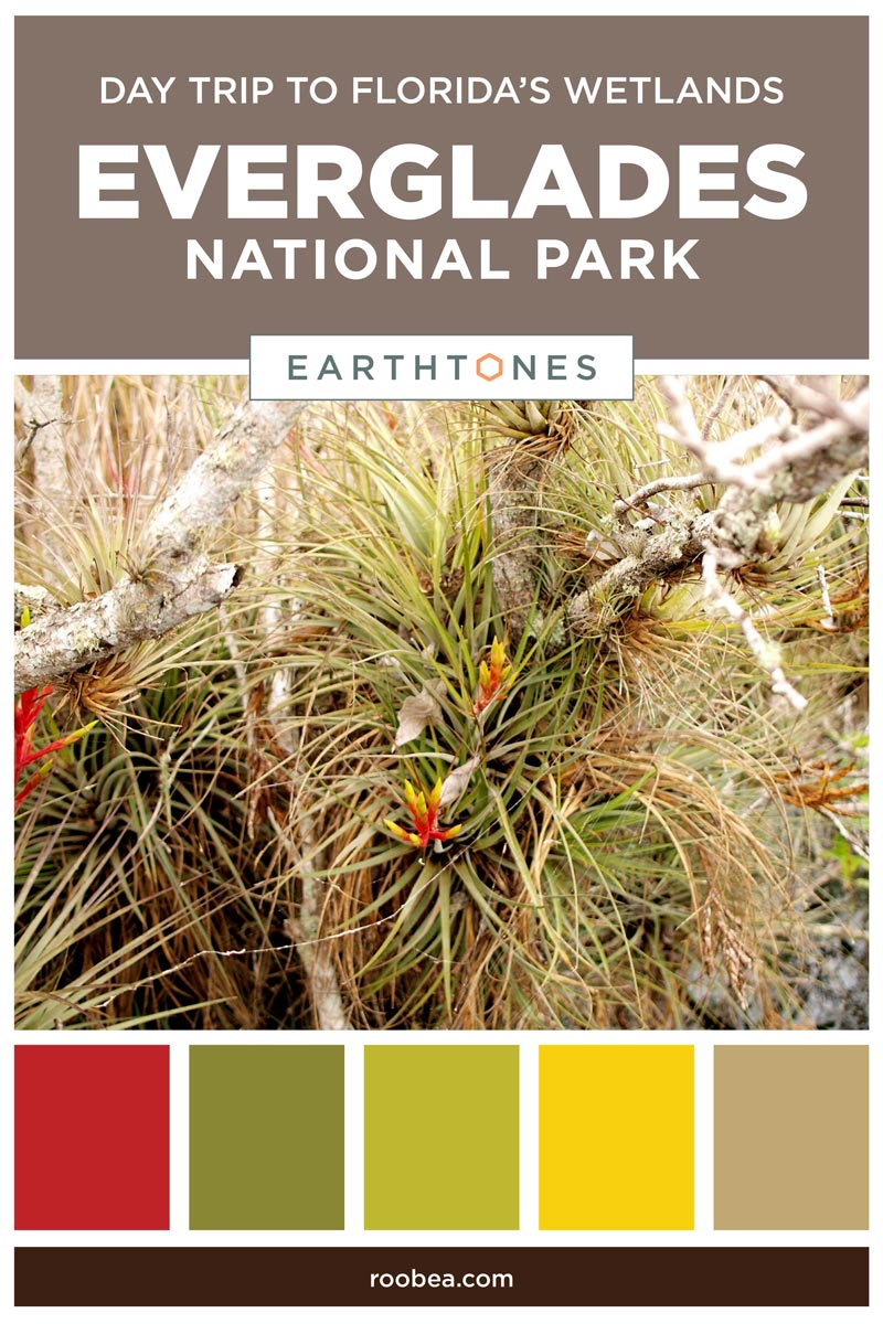 Day Trip to The Everglades National Park Florida | Earthtones Travel + Design Blog | Roo Bea Design Co