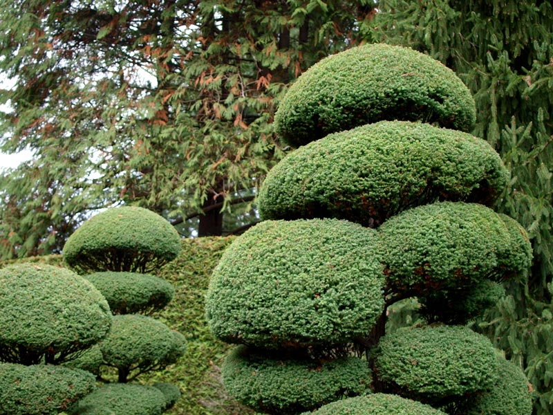 Best Time To Visit The Butchart Gardens in Victoria, British Columbia | Earthtones Travel + Design Blog | Roo Bea Design Co.