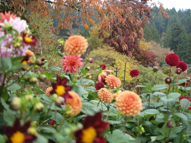Bucket List Botanical Gardens | The Butchart Gardens in Victoria, British Columbia | Earthtones Travel + Design Blog | Roo Bea Design Co