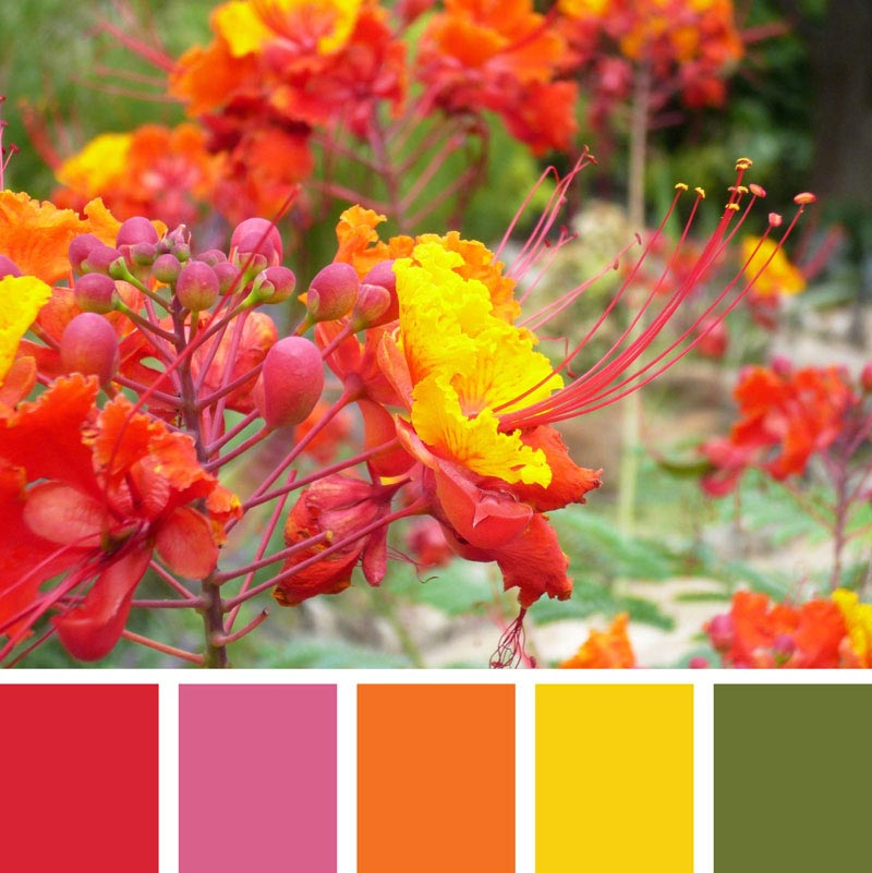 Color Palette: Bright, Floral, Cherry, Happy, Summer, Warm, Spring & Tropical | San Antonio, Texas | Earthtones Travel + Design Blog | Roo Bea Design Co.