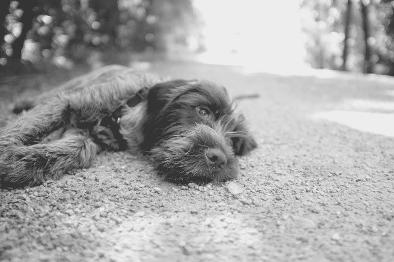 Dogs on The Katy Trail, Missouri   Earthtones Travel + Design Blog   Roo Bea Design Co.
