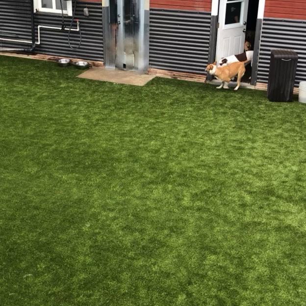 Daycare at The Shabby Dog!  #doggiedaycare #dogstagram #dogplay #doglovers #doglivesmatter #funnydogs @foreverlawnpc #foreverlawnpc
