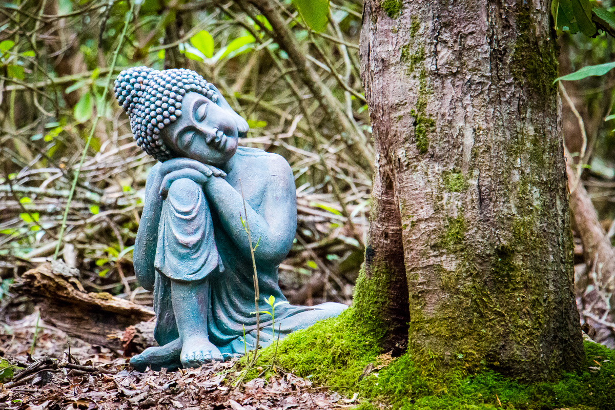 REtREATS - Several times a year, we offer guided programs in nature connection, meditation, yoga and more.