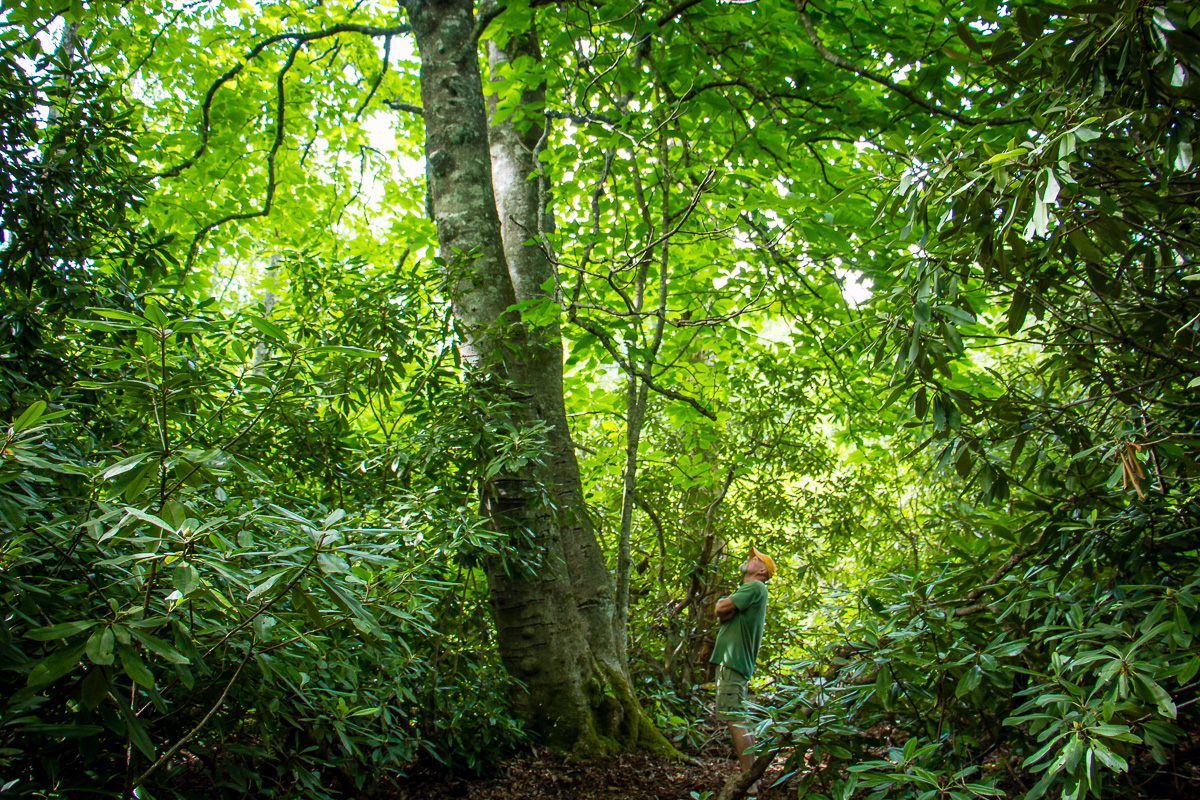 Forest Bathing walks - Join Nature & Forest Therapy Guide, Julie Sczerbinski on a forest bathing walk designed to slow you down, awaken your senses and deepen your connection to the more-than-human world.