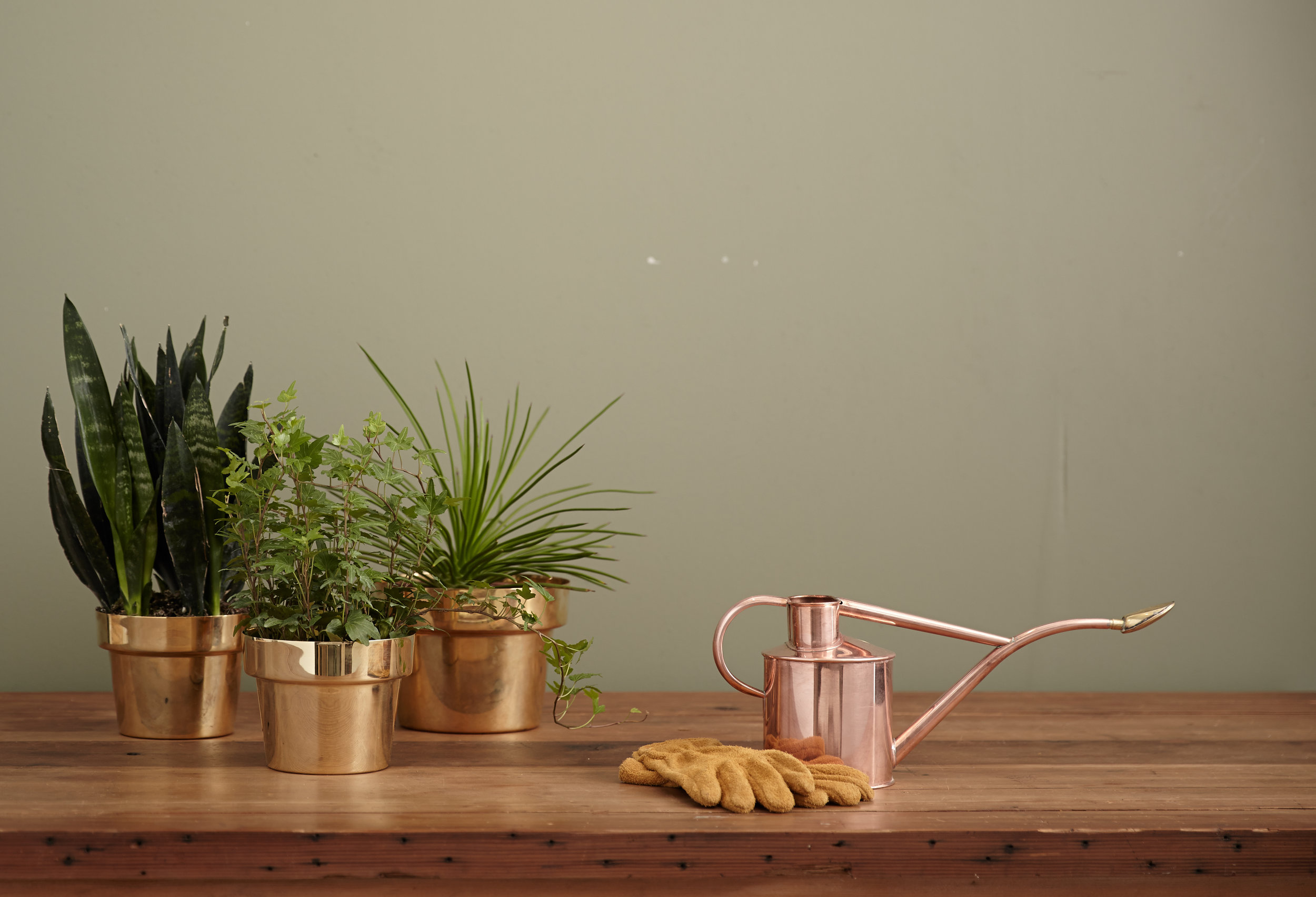 Watering can and potted plants