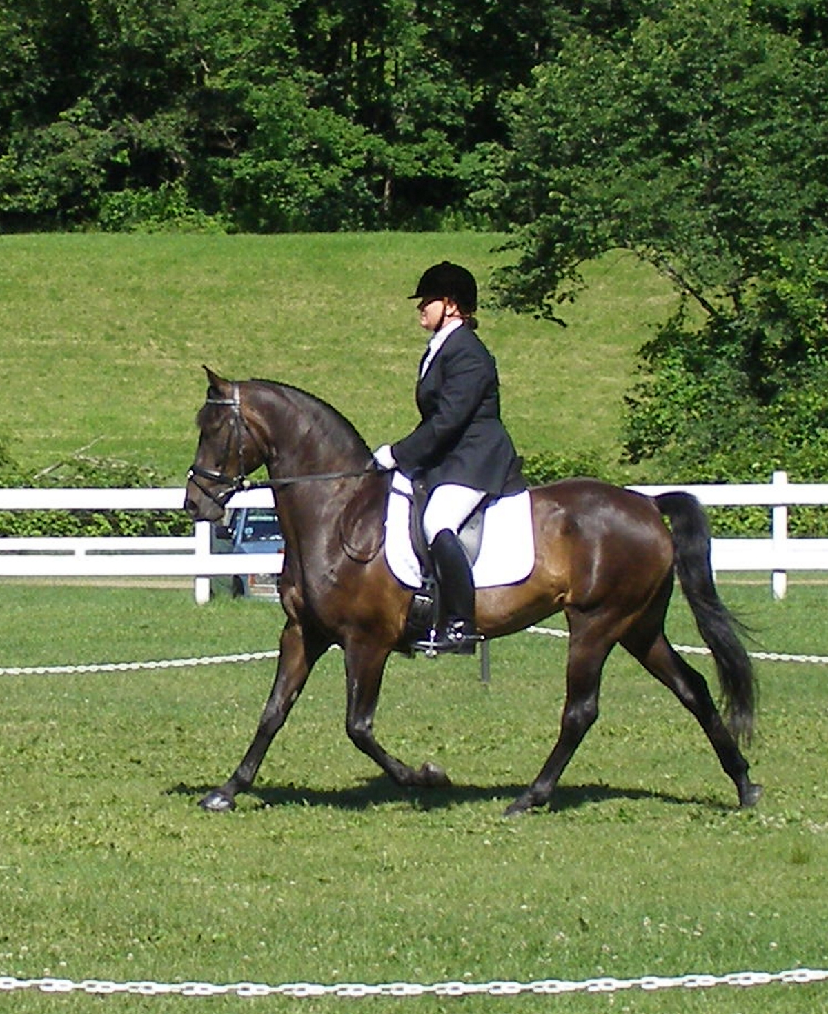 Equinox Indian Summer & Karen Harvey compete in a dressage test at Heritage Days