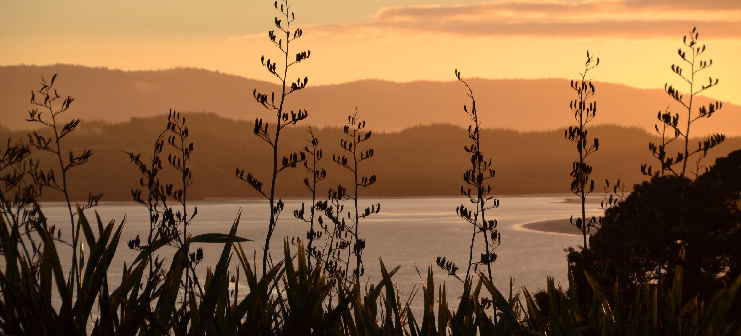 Dawn sunrise fog DSC_4375.jpg