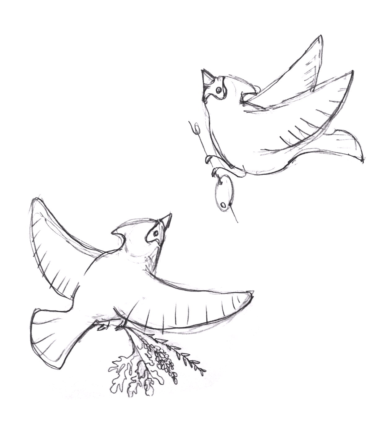 Sketches - These are a few of the preliminary sketches I created for the flight board illustrations. The cardinals were pencil on paper and the botanicals bouquet is a digital sketch.