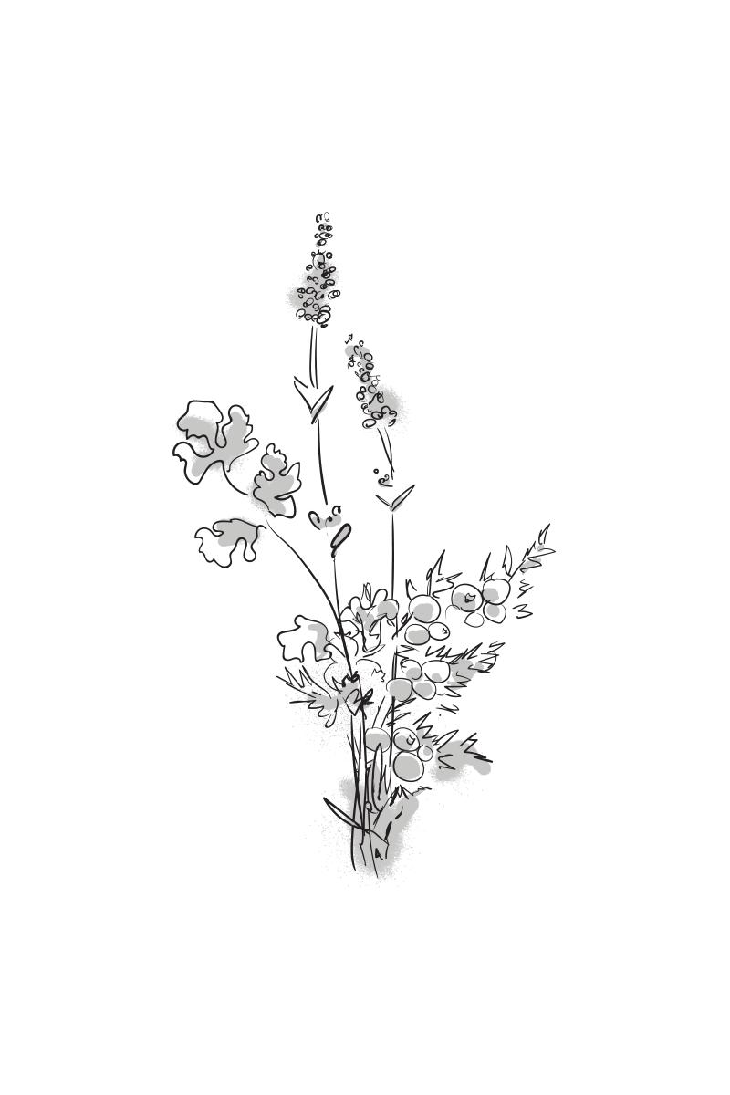 bittersweet-gin-flights-botanical-sketch.png