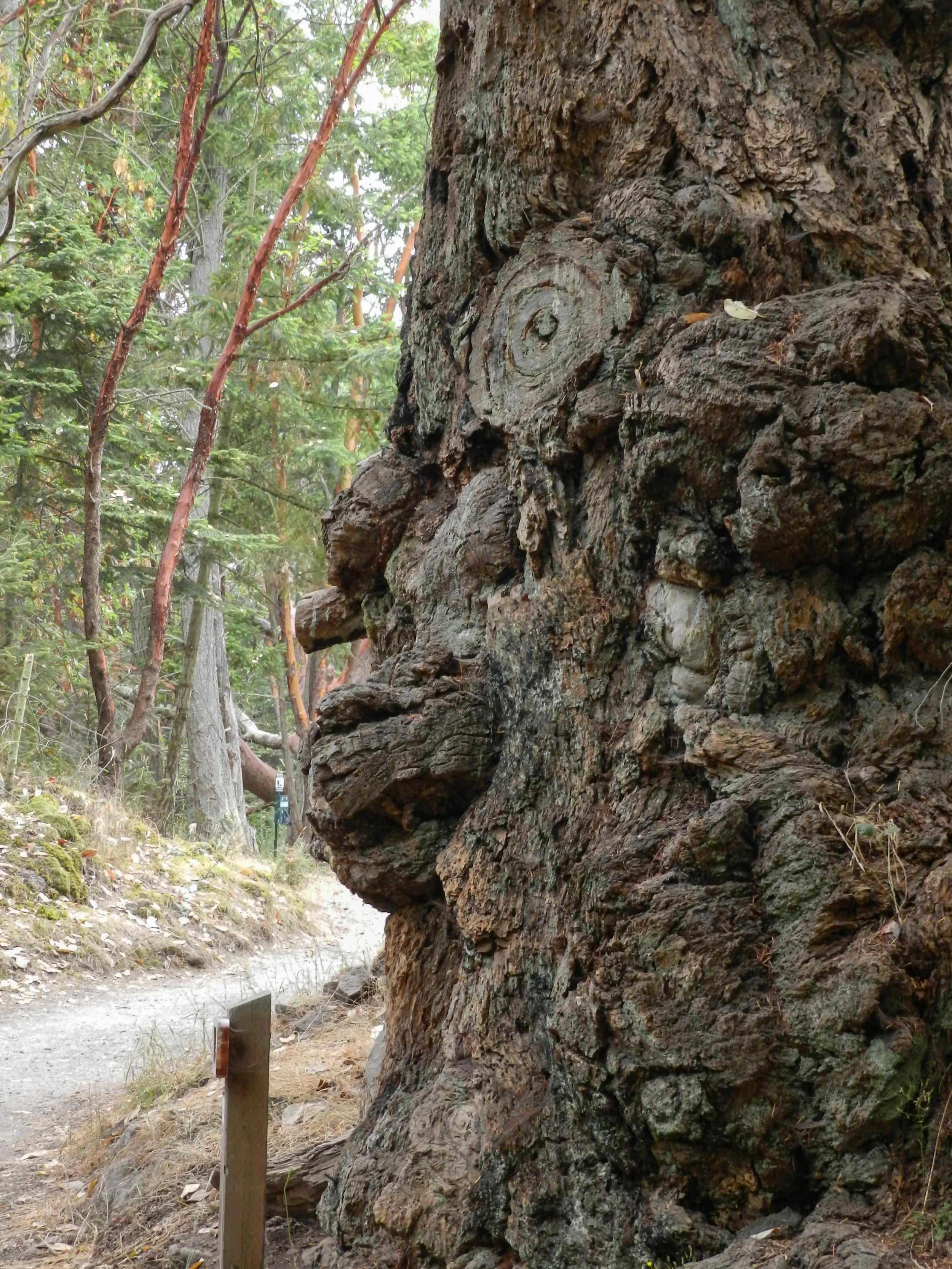 Tree Spirit, San Juan Islands.jpg
