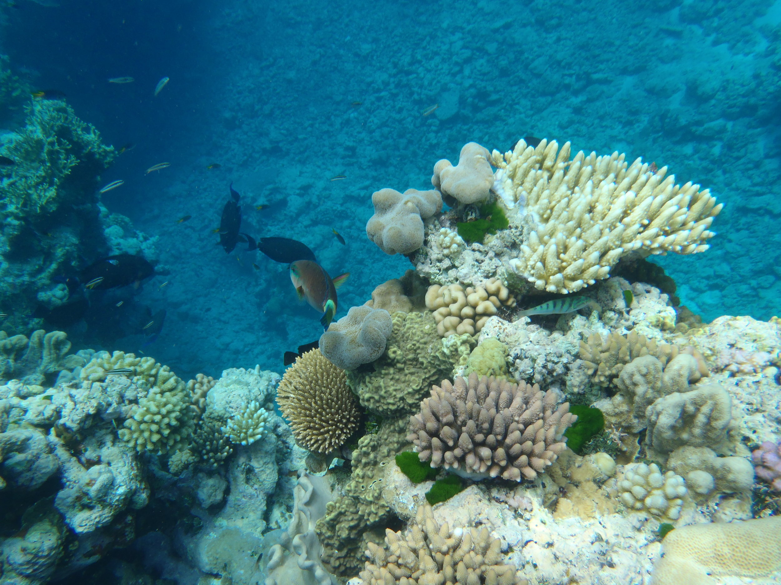 Great Barrier Reef, Australia, 2013.JPG