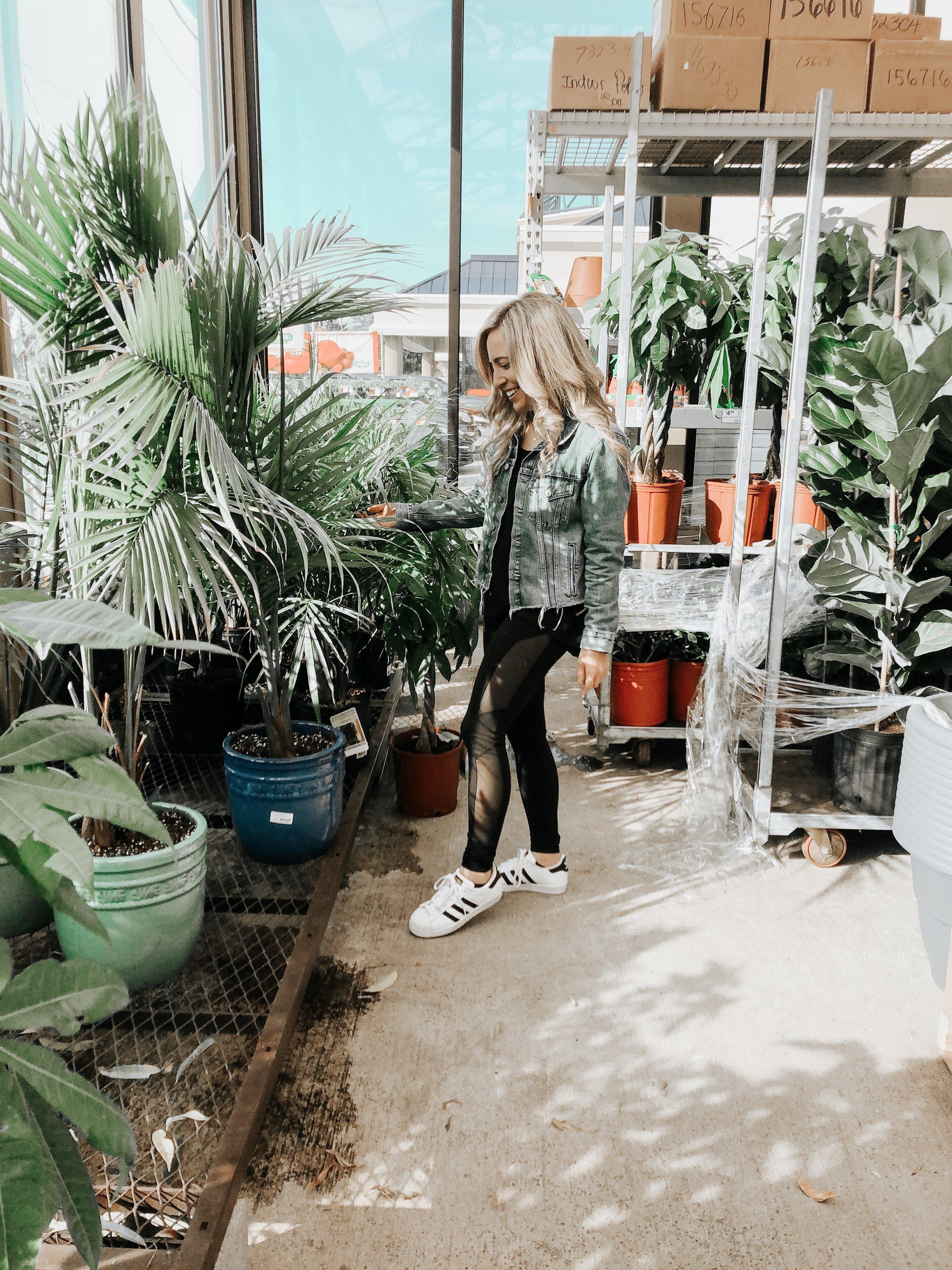 Repotting Season Plant Care 101 From Jennifer Ann