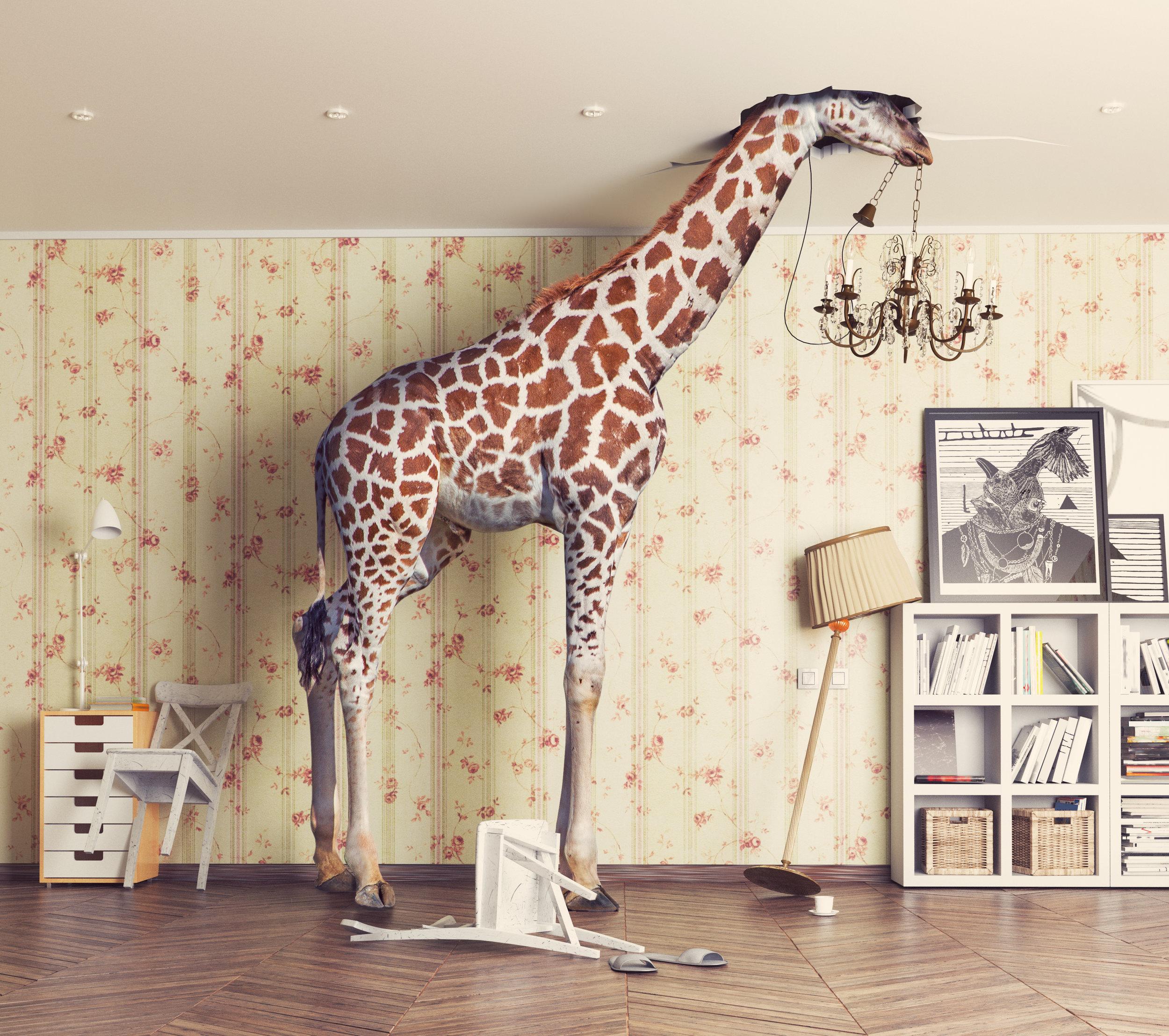 Dollar Giraffes - Live Music from 2 pm to 6 pmSunday September 1st